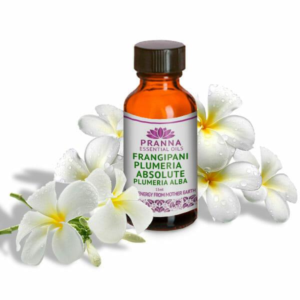 Frangipani Plumeria Absolute