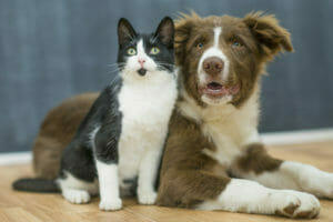 Essential Oil for Dogs and Cats